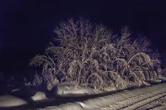 Дерево покрытое с снегом в темноте Стоковая Фотография