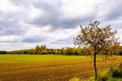 Дерево полем в осени Стоковые Изображения RF