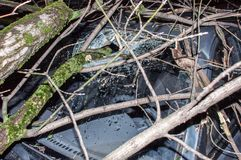Дерево поломало лобовое стекло Стоковое фото RF