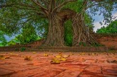 Дерево последней двери стоковое изображение