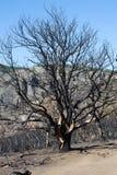 Дерево после огня стоковая фотография