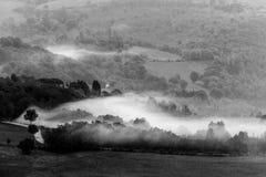 Дерево посреди тумана Стоковая Фотография