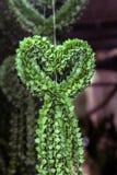 Дерево подарка валентинки. стоковая фотография