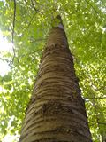 Дерево полесья стоковая фотография rf