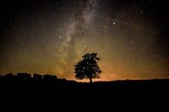 Дерево под звездами Стоковые Изображения