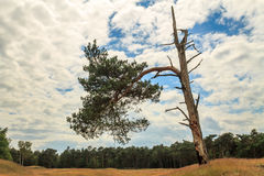Дерево под драматическим небом Стоковые Изображения