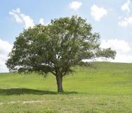 Дерево под холмом Стоковые Фото