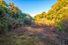 Дерево поля травы с голубым небом Стоковые Изображения RF