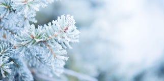 Дерево праздника рождества зима снежинок снежка рождества предпосылки Голубой спрус, красивое рождество и дизайн искусства дерева стоковые изображения rf