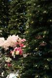 Дерево предпосылки рождества с оформлением и цветками Стоковая Фотография RF