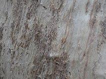 Дерево 0006 предпосылки Стоковое фото RF