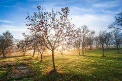 Дерево премудрости стоковые изображения rf