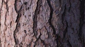 Дерево предпосылки обоев Стоковая Фотография