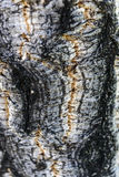Дерево пробочки - деталь Стоковое фото RF