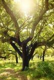 Дерево пробочки стоковое изображение
