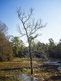 Дерево пропускать заводи стоковая фотография
