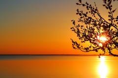 Дерево против моря солнца захода солнца Стоковые Фото