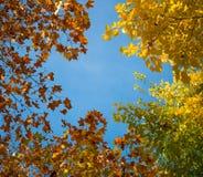 Дерево против неба Стоковые Изображения