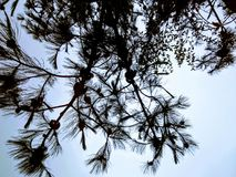 Дерево против света во время пасмурного дня Стоковая Фотография