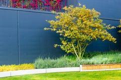 Дерево против стены в после полудня wroclaw Стоковые Фото