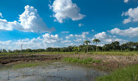 Дерево пруда и голубое небо Стоковые Фотографии RF