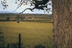 Дерево прятк стоковые фотографии rf