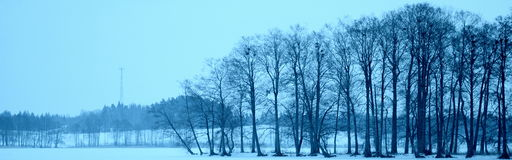 Дерево птиц голубого неба озера Стоковые Изображения