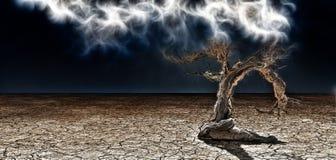 Дерево пустыни иллюстрация штока