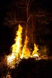 Дерево пламени на ноче Стоковое фото RF