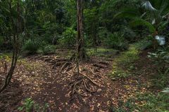 Дерево развилки & свои корни стоковое фото rf