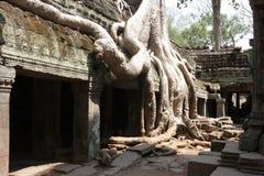 Дерево разрушая историю Стоковые Фотографии RF