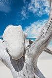 Дерево раковины на морском побережье с голубым небом стоковые фотографии rf