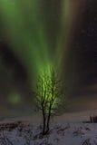 Дерево рассвета Стоковые Фото