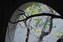 Дерево растет в покинутый дом, концепцию прорыва стоковое изображение