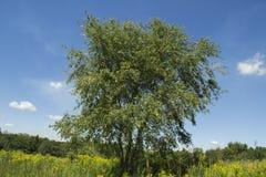Дерево растя в ландшафте прерии Стоковое фото RF