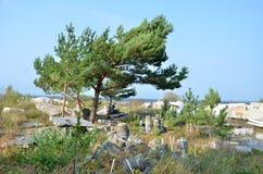 Дерево растя между отбросом Стоковая Фотография