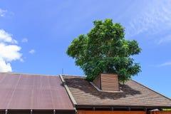 Дерево растя на крыше холодно и приятно стоковое изображение rf