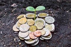 Дерево растя на монетках стоковые фотографии rf