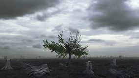 Дерево растя на Deforested земле сток-видео