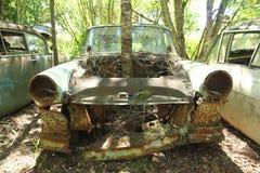 Дерево растя от автомобиля Стоковые Изображения