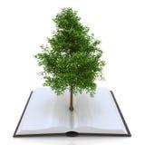 Дерево растя от открытой книги, альтернативная рециркулируя концепция Стоковые Изображения