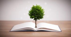 Дерево растя от открытой книги стоковое изображение rf