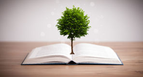 Дерево растя от открытой книги Стоковые Изображения RF