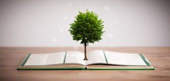 Дерево растя от открытой книги Стоковые Фотографии RF