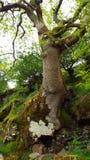 Дерево растя через старую стену стоковое изображение rf