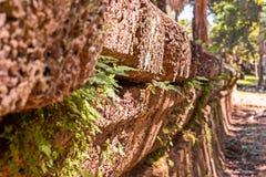 Дерево растя через стену песка каменную Малый дерев-во время роста на старой стене расти через отказ в старой на всю жизнь Стоковое Изображение RF