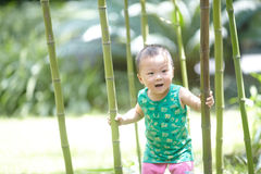 Дерево ребёнка взбираясь стоковая фотография