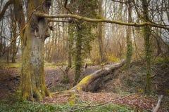 Дерево древесиной Wath стоковые фото