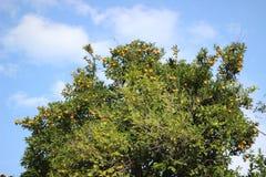 Дерево родины оранжевое в индюке стоковые фото