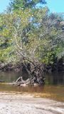 Дерево русалки стоковое фото